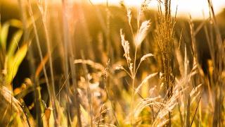 AGROVOC Spotlight